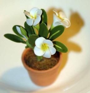phera's flowers