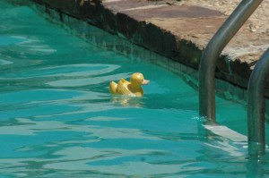 pool duckie