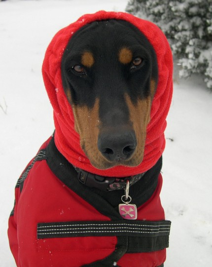 cozyhorse - little red riding snood