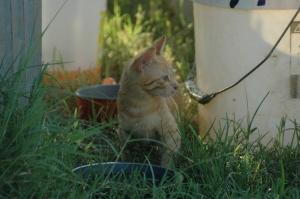barn cat baby